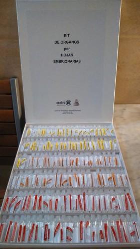 Kit de órganos por capas embrionarias