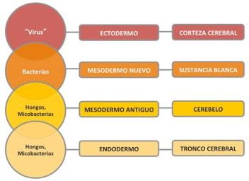 Microbios y capas